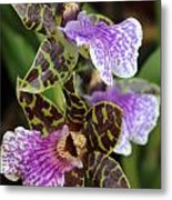 Orchid Five Metal Print