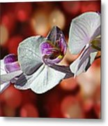 Orchid Flower Photographic Art Metal Print