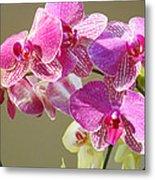 Orchid Flowers Art Prints Pink Orchids Metal Print