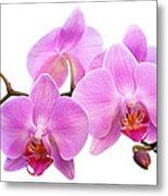 Orchid Flowers II - Pink Metal Print