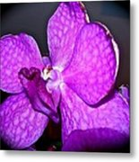 Orchid From Art Gallery Metal Print