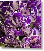 Orchid Grouping Metal Print