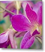 Orchid - Haliimaile Spring Pink Metal Print