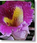 Orchid Heart And Soul Metal Print