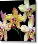 Orchid In Blossom Metal Print