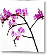 Orchid In White  Metal Print