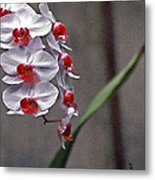 Orchid In Window Metal Print