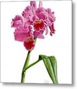 Orchid - Lc. Culminant La Tuilerie Metal Print