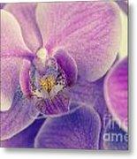 Orchid Lilac Dark Metal Print
