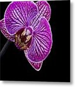 Orchid On Black Background Metal Print