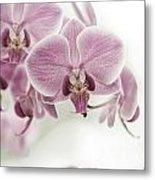 Orchid Pink Vintage Metal Print