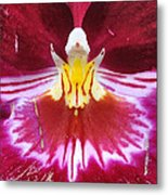 Orchid Pink Yellow White Metal Print