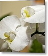 Orchid Purity Metal Print