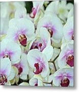 Orchid Sea Metal Print
