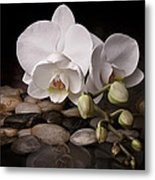 Orchid - Sensuous Virtue Metal Print by Tom Mc Nemar