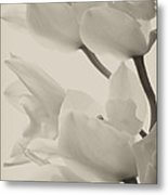 Orchid Sepia Metal Print