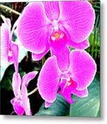 Orchid Series 1 Metal Print