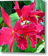Orchid Series 3 Metal Print