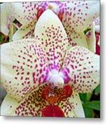 Orchid Series 5 Metal Print