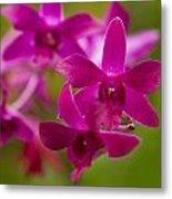 Orchid Splendor Metal Print