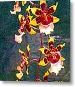 Orchid Spray By Pottery  Metal Print