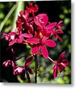 Orchid Study V Metal Print