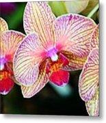 Orchid Trio Metal Print