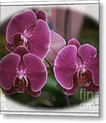 Orchid Trio Metal Print