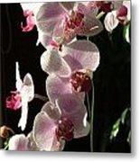 Orchid Tropical Blooms Metal Print