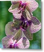 Orchid Two Metal Print