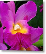 Orchid Variations 1 Metal Print by Rona Black