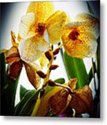 Orchid Vignette Metal Print