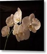 Orchid White Metal Print