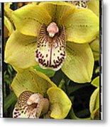 Orchids  9 Metal Print