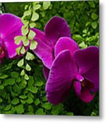 Orchids And Baby Tears Metal Print