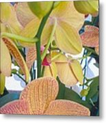 Orchids And Buds Metal Print by Robert Bray