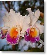 Orchid Elsie Sloan Metal Print