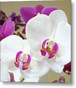 Orchids Floral Art Prints White Pink Orchid Flowers Metal Print