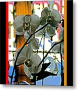 Orchids For A Lady Metal Print