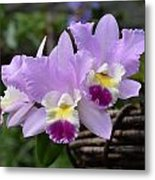 Orchids In A Basket Metal Print