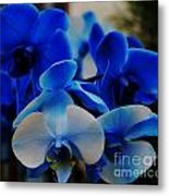 Orchids In Blue  Metal Print
