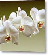 Orchids In Green Metal Print