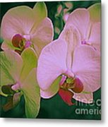 Orchids In Pink And Green Metal Print