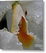 Orchid's Inner Glow Metal Print