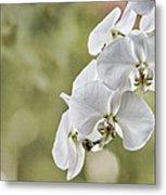 Orchids Metal Print by Karen Walzer