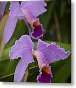 Orchids Pictures 1 Metal Print