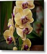 Orchids Pictures 10 Metal Print