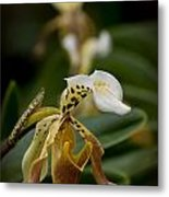 Orchids Pictures 28 Metal Print