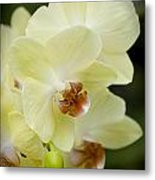 Orchids Pictures 34 Metal Print