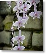 Orchids Pictures 47 Metal Print